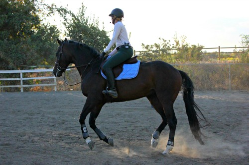 3 Reasons Riding Horses is Good for Your Brain | Saddle Seeks Horse