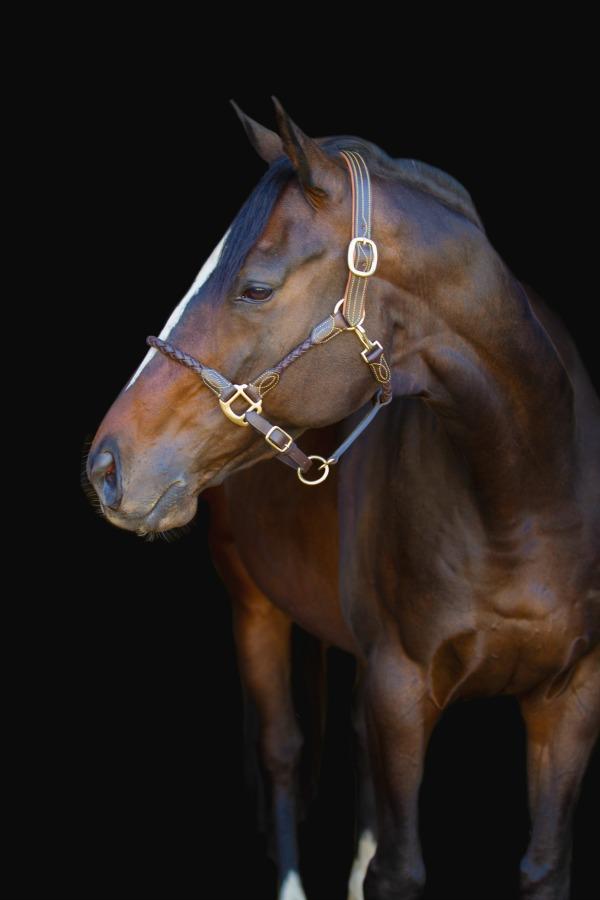 Premiera Vienna Halter Exudes Equine Elegance | Saddle Seeks Horse